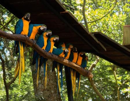 Попугаи Амазонии